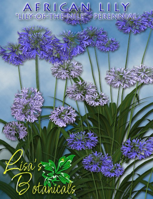 Lisa's Botanicals - African Lily