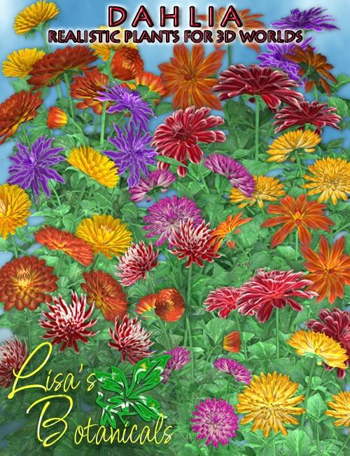Lisa's Botanicals - Dahlia