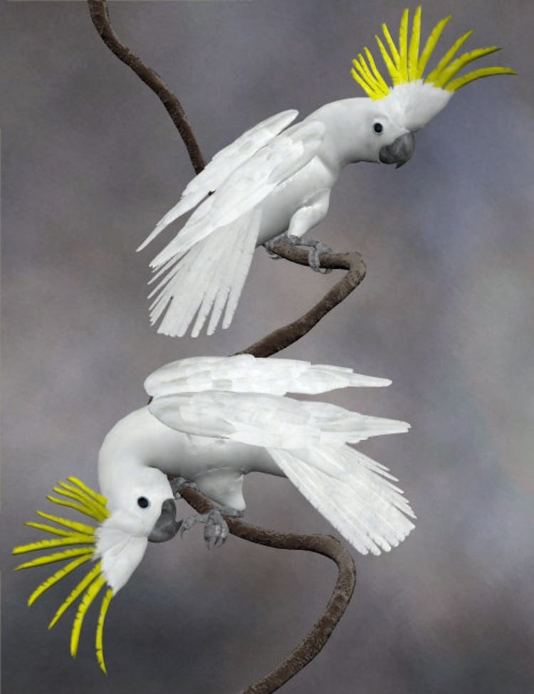Noggin's Cockatoo
