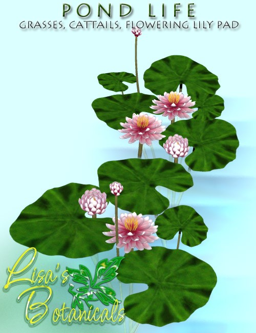 Lisa's Botanicals - Pond Life Plants